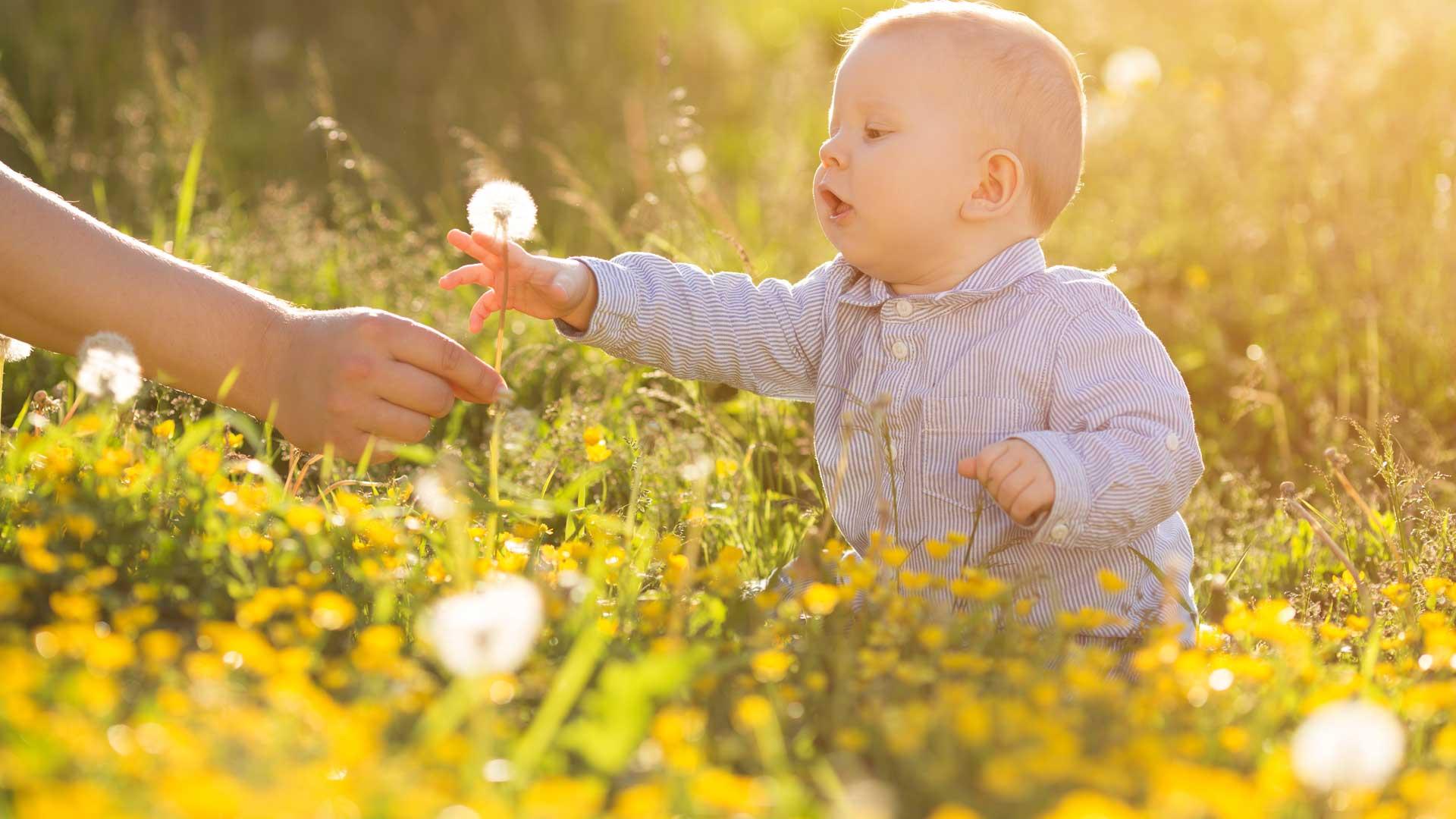 De vanligste pollenallergiene | LHL